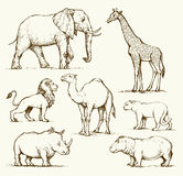 African animals. Vector drawing Stock Image