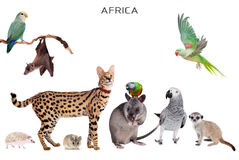 African animals on white Stock Image