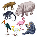 African animals Royalty Free Stock Photo