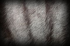 African antelope fur. Real texture with vignette Stock Photos