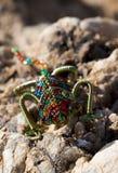 African art chameleon. Royalty Free Stock Images