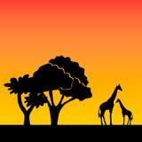 African background on evening savanna Stock Photo