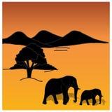 African background on evening savanna Stock Photos