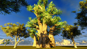 African baobabs Stock Photo