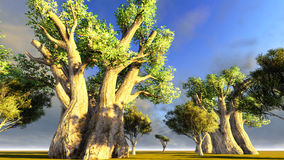 African baobabs Stock Images