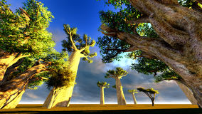 African baobabs Royalty Free Stock Photos