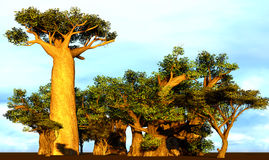 African baobabs Royalty Free Stock Photography