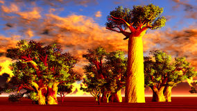 African baobabs Stock Photos