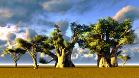 African baobabs Stock Image