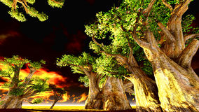 African baobabs Royalty Free Stock Photo