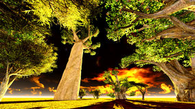 African baobabs Stock Photos