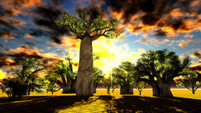 African baobabs Stock Photography