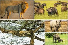 African Big Five Royalty Free Stock Photos