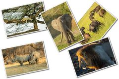 African Big Five royalty free stock photo