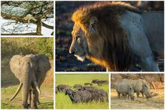 African Big Five Stock Photo