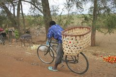 African bike. A cyclist takes a rest after delivering a large laod of fruit in Tanzania royalty free stock photography