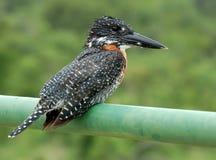 African Bird Stock Photography