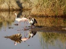 African birds Stock Photos