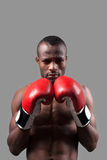 African boxer. Stock Image