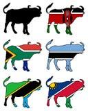 African buffalo Royalty Free Stock Image