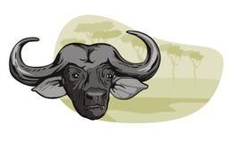 African Buffalo in Safari. Vector art of an african buffalo vector illustration