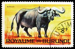 African Buffalo (Syncerus caffer), Animals serie, circa 1964. MOSCOW, RUSSIA - MAY 25, 2019: Postage stamp printed in Burundi shows African Buffalo (Syncerus royalty free stock photos