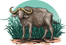 African buffalo. Vector illustration of an African buffalo Stock Photos