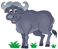 African bull image 1 Stock Photo