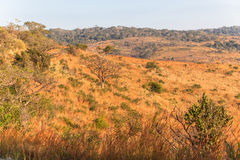 African Bush Color Vegetation. Morning sunlight contrasting colors of long grass trees landscape vegetation in the african bush wildlife animal game reserve Royalty Free Stock Images