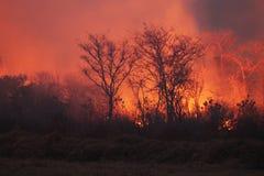 Bush Fire Stock Photography