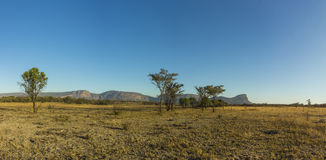African bush landscape. In the early morning Royalty Free Stock Photography