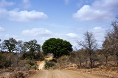 African bush road. Witg big green tree. Picture was taken in Kruger National park, South Africa Royalty Free Stock Photos
