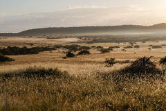 African Savanna Plains Sunrise Mist Stock Image