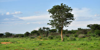 African bush savannah, Namibia Royalty Free Stock Photos