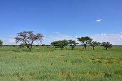 African bush savannah, Namibia Royalty Free Stock Photo