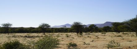 Free African Bush-veld And Grassland Landscape With Acacia Trees And Purple-blue Mountains Behind At Okonjima Nature Reserve, Namibia Royalty Free Stock Images - 125335649