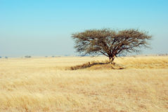 African Bushveld Royalty Free Stock Photos