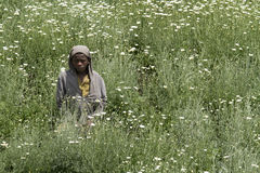 African child in a daisies field Royalty Free Stock Image