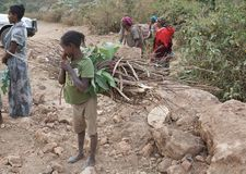 African child. Of the Dorze ethnic group is carrying woods along the road from Arba Minch to the Dorze village, in the Guge mountains, Ethiopia Royalty Free Stock Photos