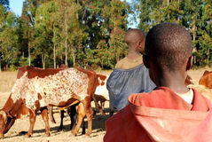 An African child watching another child herding cows Stock Photos