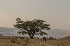 African community meeting under a tree. In Africa Stock Photography