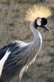 African Crane Stock Photo