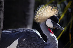 African Crane Stock Images