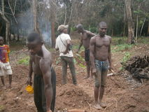 THE AFRICAN CULTUVATEURS. Men s' ready to make mounds in a field in the country Akan royalty free stock images
