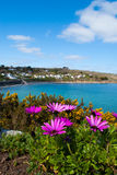 African Daisies with a view of Coverack Royalty Free Stock Photography