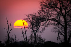 African dawn. An amazing sunrise in Kruger park, South Africa Royalty Free Stock Photo