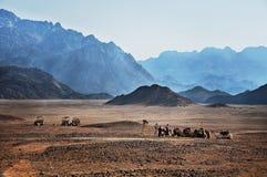 African desert in Hurghada Stock Photography