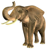 African Elephant. 3D rendering of an African elephant trumpet in Pose Royalty Free Stock Image