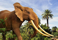 African elephant. Walking close up Royalty Free Stock Images