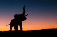 African elephant. Silhouette trumpeting in sunset in the wild royalty free stock photo